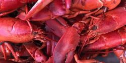 37th Annual Lobster Bake to Go… with curbside pickup!